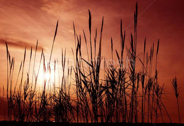 ストックフォト: 赤 · 空 · シルエット · 曇った · 午前 · 太陽