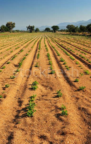 Vegetal fazenda vertical versão de manhã cedo Foto stock © akarelias