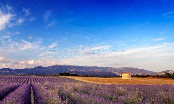Krajobraz Francja obraz lawendowe pole mały stodoła Zdjęcia stock © akarelias