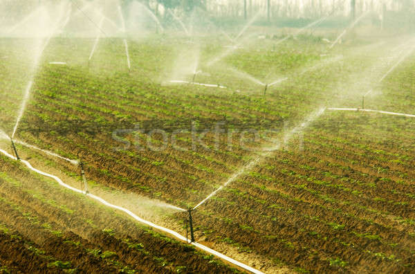 Irrigation Stock photo © akarelias