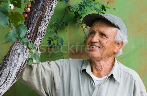 Feliz senior olhando árvore imagem pessoa Foto stock © akarelias