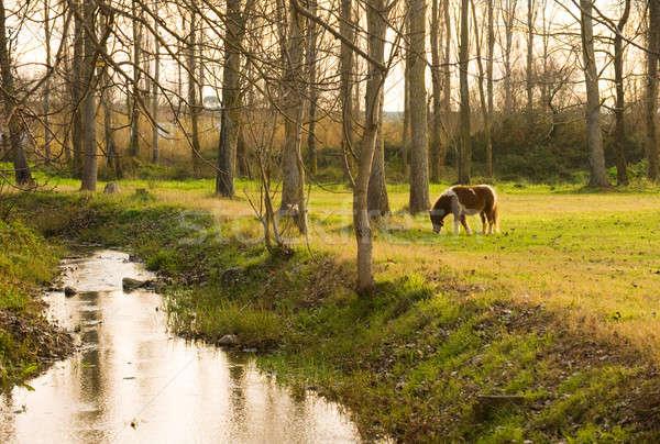 Póni vidéki kép eszik fű kicsi Stock fotó © akarelias