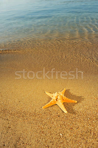 Denizyıldızı kum büyük altın deniz Stok fotoğraf © akarelias