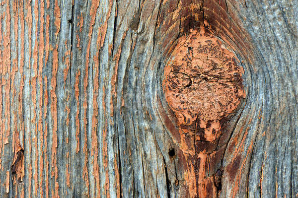 Yıpranmış ahşap doku büyük düğüm ahşap Stok fotoğraf © akarelias