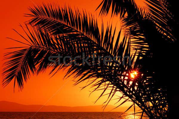 Palmeira pôr do sol quadro sol parcialmente escondido Foto stock © akarelias