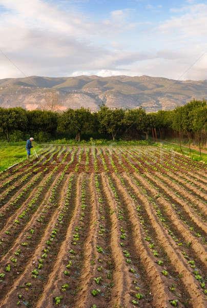 Pequeno fazenda imagem velho jeans trabalhando Foto stock © akarelias
