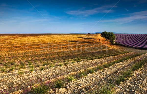 Resim güney Fransa erken Stok fotoğraf © akarelias
