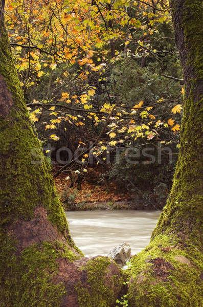 Outono cena floresta água córrego árvore Foto stock © akarelias