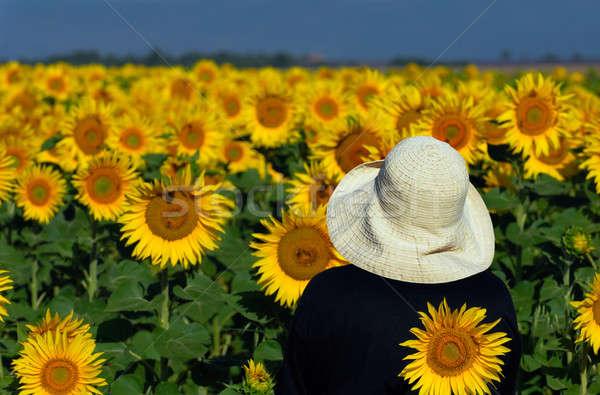 Olhando girassóis imagem pessoa branco seis Foto stock © akarelias