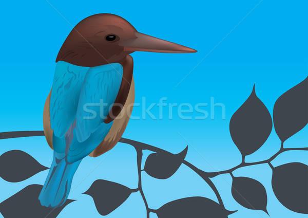 Eisvogel Vogel Himmel Baum Blatt Blätter Stock foto © Akhilesh