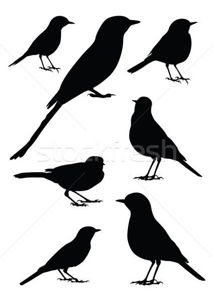 Birds Silhouette - 7 different vector illustrations Stock photo © Akhilesh