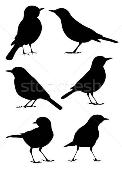 Birds Silhouette - 6 different vector illustrations Stock photo © Akhilesh