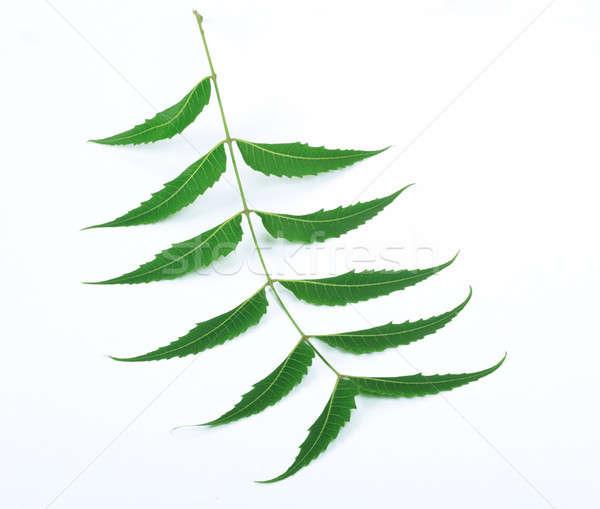 Indian Herbal / Medicinal Leaf on White Background Stock photo © Akhilesh
