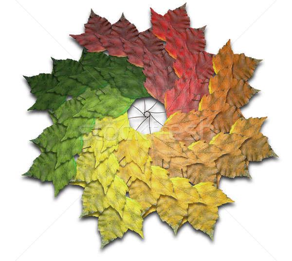 Maple Leaf осень спектр 40 клен листьев Сток-фото © albund