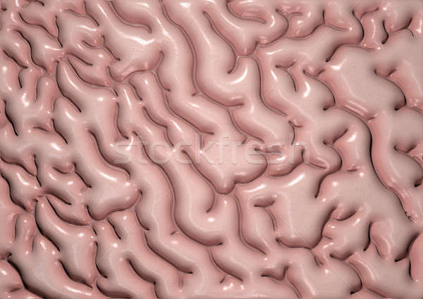 Brain Tissue Stock photo © albund