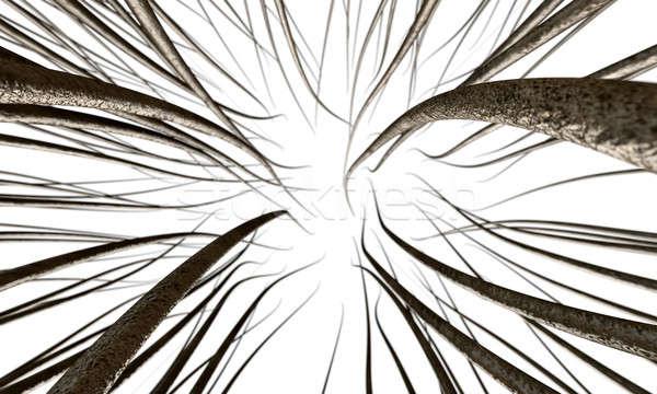 Mikroskobik saç 3d render görmek Stok fotoğraf © albund