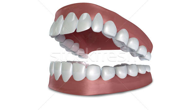 Teeth Set Open Isolated Stock photo © albund