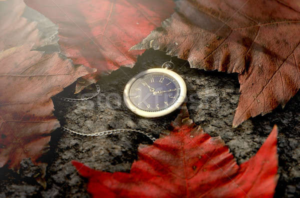 Lost Pocket Watch On Chain Stock photo © albund