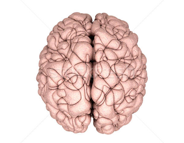 Brain Top View Stock photo © albund