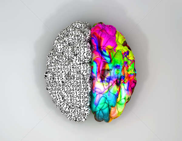 Left And Right Brain Concept Top Stock photo © albund