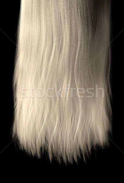 Length Of Hair Stock photo © albund