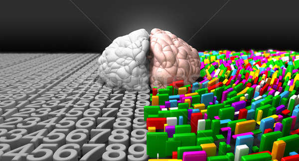 Left Brain & Right Brain Stock photo © albund