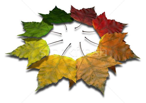 Esdoornblad najaar spectrum esdoorn bladeren alle Stockfoto © albund