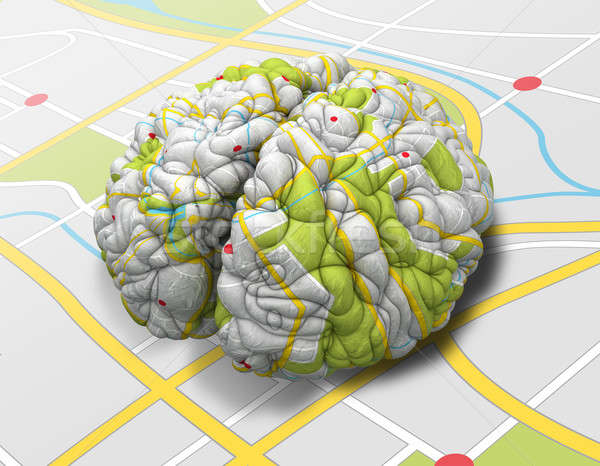 Mind Map Brain Perspective Stock photo © albund