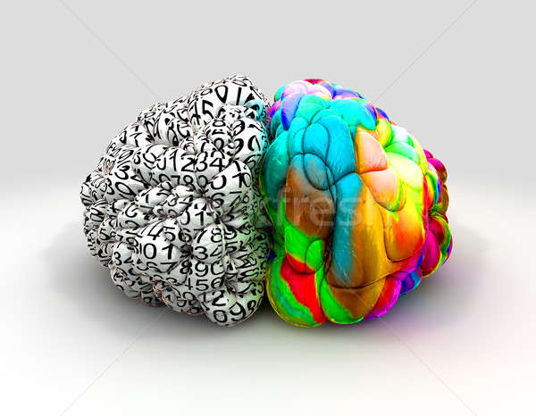 Left And Right Brain Concept Front Stock photo © albund