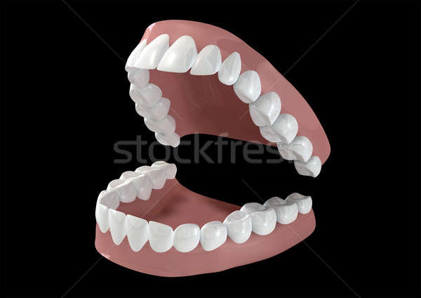 Teeth And Gums Open Stock photo © albund