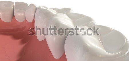 False Human Teeth Extreme Closeup Stock photo © albund