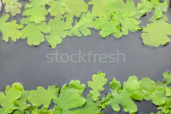 Carvalho folhas água espaço céu árvore Foto stock © alekleks