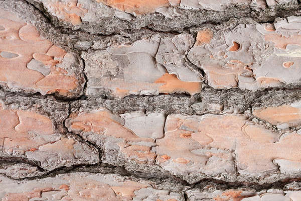 Textur Rinde kann benutzt Baum Holz Stock foto © alekleks