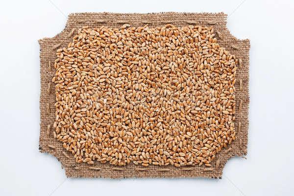 Cadre toile de jute grains de blé mentir blanche fond Photo stock © alekleks