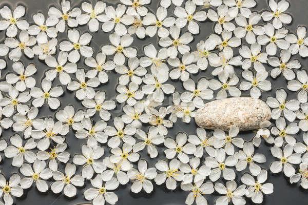 春 静物 白 石 白い花 水 ストックフォト © alekleks