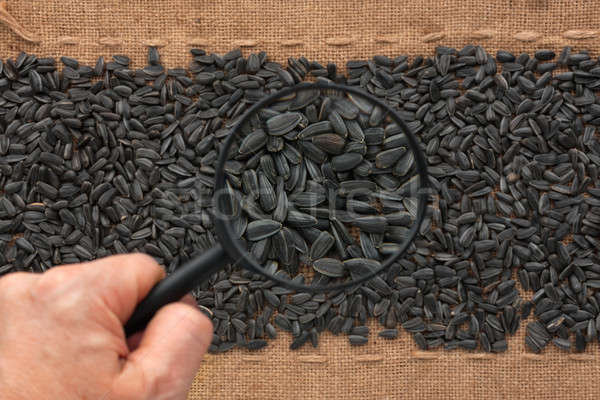Man's hand with magnifying glass over sunflower seed  Stock photo © alekleks