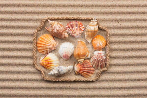 Beautiful frame made of rope and sea shells on the sand with tex Stock photo © alekleks