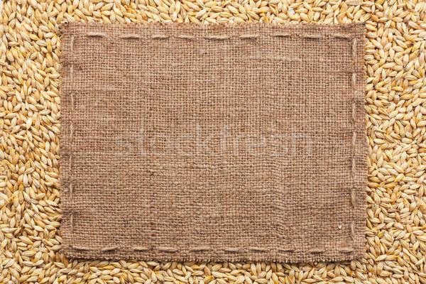 классический кадр ячмень зерна пространстве фон Сток-фото © alekleks