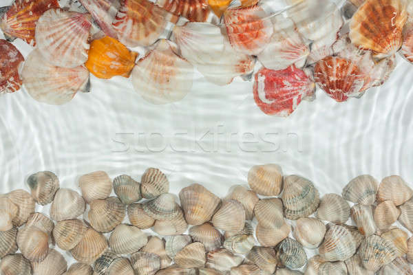 Seashells under water Stock photo © alekleks