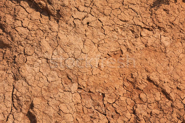 Withered chapped clay Stock photo © alekleks