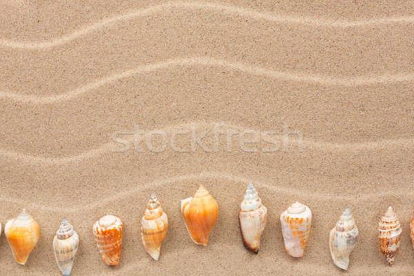 желтый оболочки лежать песок можете используемый Сток-фото © alekleks