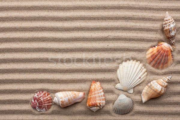 Seashells amid undulating sand  Stock photo © alekleks