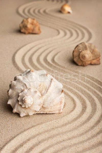 Seashells  on the sand  Stock photo © alekleks