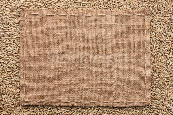 классический кадр рожь зерна пространстве фон Сток-фото © alekleks