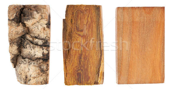 The bark and wood of amur velvet Stock photo © alekleks