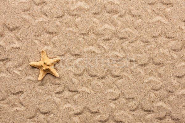 Zeester zand strand natuur achtergrond schoonheid Stockfoto © alekleks