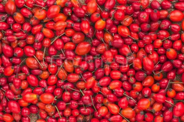Background out of wild rose  Stock photo © alekleks