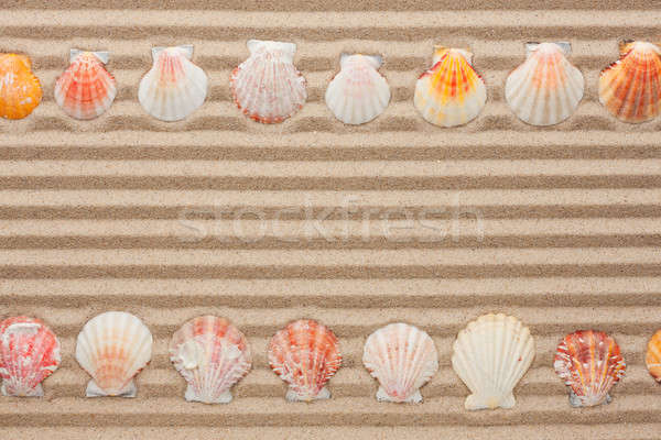 Two rows of sea shells lying on the sand Stock photo © alekleks