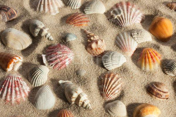 Foto stock: Conchas · fora · areia · luz · solar · praia