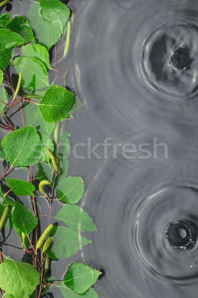 Zöld nyírfa levelek víz eső űr Stock fotó © alekleks